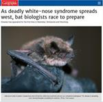 As deadly white-nose syndrome spreads west, bat biologists race to prepare