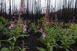 Burned and beetle-killed forests need protection too