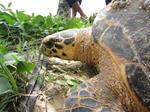 WCS in Nicaragua: Canadian scientist leads endangered turtle conservation project