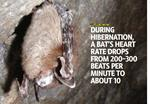 Can bats be saved?