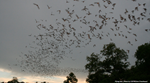 What's the Best Way to Welcome Bats to the Neighborhood? The Goldilocks Approach.