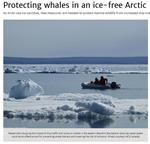 Protecting Whales in an Ice-free Arctic