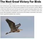 The Next Great Victory for Birds