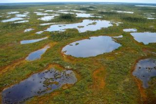 Wetlands and peatlands in Ontario's Far North offer important opportunities to address climate change mitigation and adaptation © Josef MacLeod